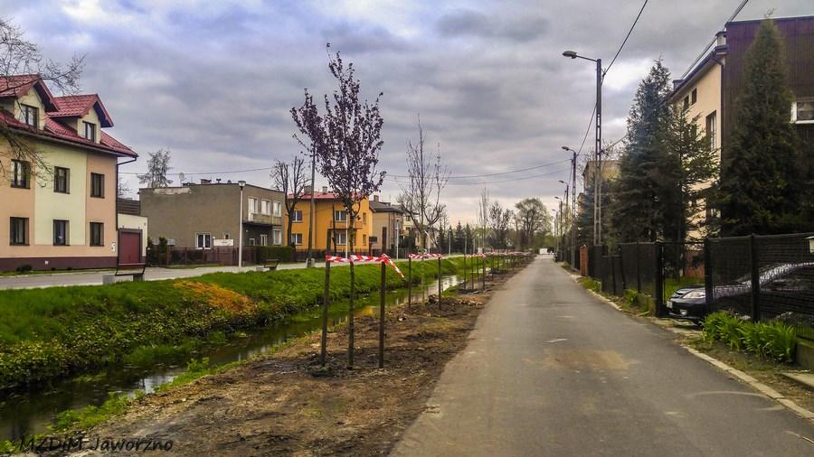 Sadzimy drzewa w mieście