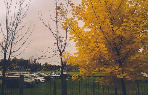 Cmentarz 1 listopada2