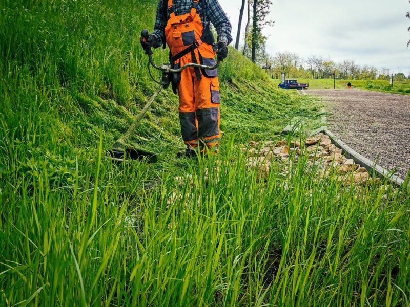 na zdjęciu widać koszenie trawy